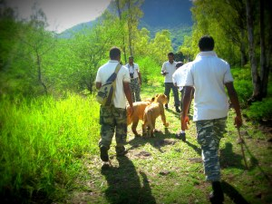 The walk with the lion cubs