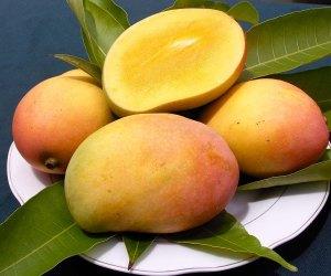Mango-18-new1